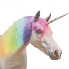 Ride with a Unicorn - Einhorn Autosticker