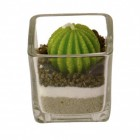 Kugel Kaktus im Glas Kerze