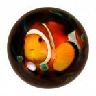 Clownfisch Briefbeschwerer