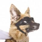 Ride with a Dog - Hund Autosticker